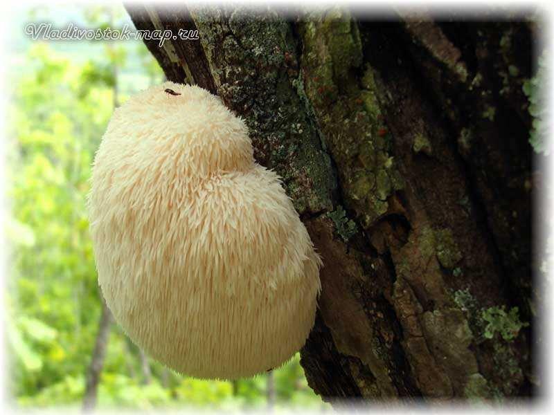 фото грибов съедобных с названиями