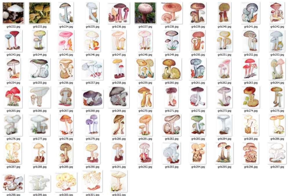 фото грибов сьедобных