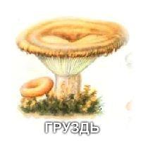 Картинки грибов с названиями съедобные для детей